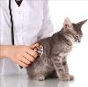 Ветеринарные клиники в Ваче